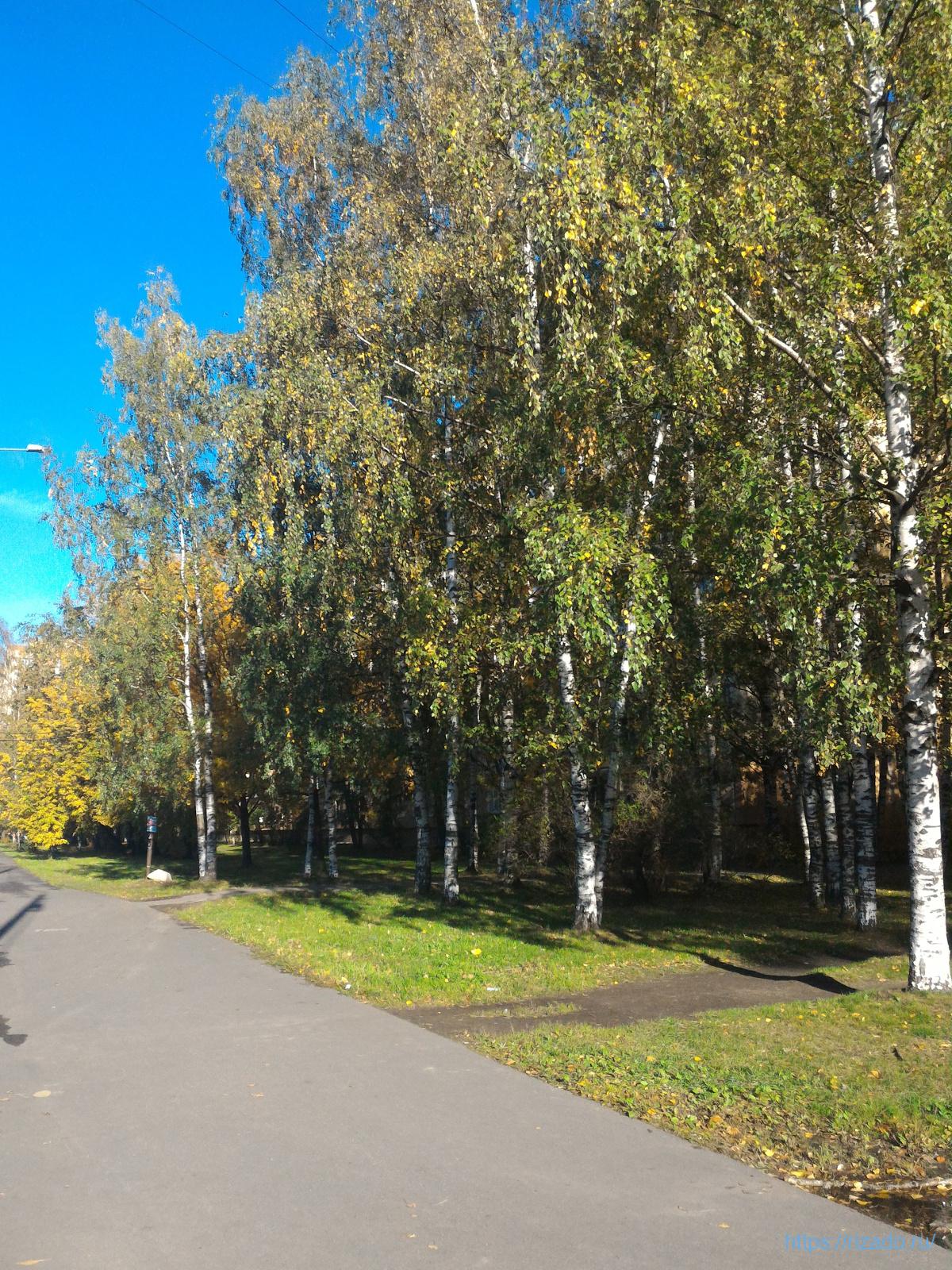 Светлановский проспект, Ленинград