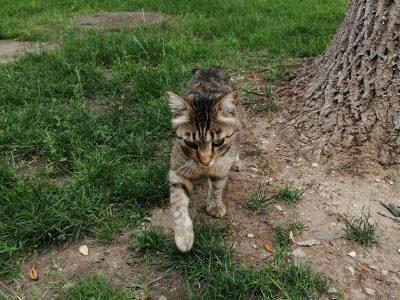 Симферопольский кот. Улица Горького. Фото 2